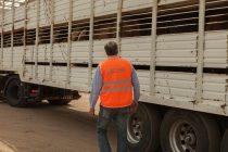 Buenas prácticas previas al transporte: cómo minimizar el estrés en el ganado
