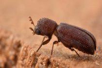 Curso sobre Insectos y Ácaros en granos y subproductos almacenados