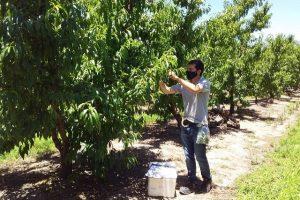 Inspecciones fitosanitarias en localidades del norte de la provincia de Buenos Aires