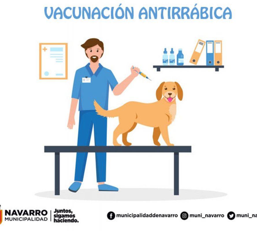 Vacunación antirrábica en Villa Moll