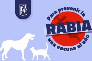 Colegio de Veterinarios: Para prevenir la rabia, una vacuna al año